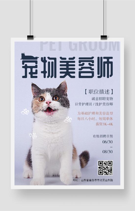宠物美容师招聘猫咪海报