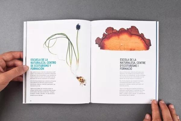 企业画册 植物 树轮